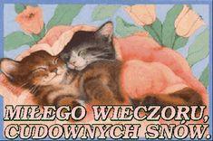 Wierszyki i gify na dobranoc: Gify na dobranoc kotki Humor, Cats, Poster, Animals, Dog Love, Gatos, Animales, Humour, Animaux