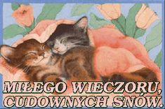 Humor, Cats, Poster, Animals, Dog Love, Gatos, Animales, Animaux, Humour