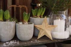 Christmas Flowers, Dinner Table, Advent, Planter Pots, Diy, Granite Counters, Dinning Table, Xmas Flowers, Bricolage