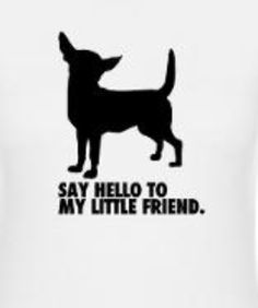 Say hello to my little friend #chihuahua