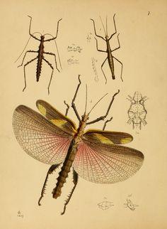 The cabinet of oriental entomology :   London :William Smith, 113 Fleet Street,1848