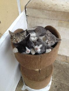 ••••(KO) Kittens blooming in a pot. Someone is getting frisky in there. Some kitties look mad. Naughty!
