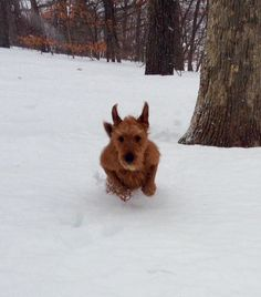 Another impersonation, this time he's super hero Bat Dog! Irish Terriers rock!