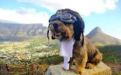 #viagem #cachorro #oscar África do Sul