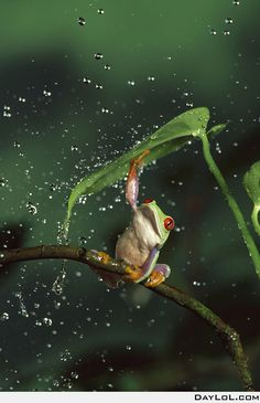 You always need an umbrella in the rainforest
