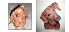 portraits of your pet.
