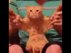 Dubstep Cat (Vine Videos) - YouTube