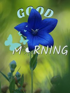 - Salvabrani Good Morning Photos, Good Morning Flowers, Good Morning Good Night, Morning Pictures, Morning Wish, Morning Qoutes, Morning Greeting, English, Quotes