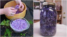Tato rostlina roste na mnoha místech. Kromě své krásy zaujme i tím, jak blahodárné účinky má na lidské tělo. Vyrobte z ní olej a budete stále zdraví. O jakou se jedná a jak na přípravu? Herb Garden, Mason Jars, Diy And Crafts, Herbs, Herbs Garden, Herb, Spice, Mason Jar, Edible Garden