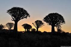 Photography of Grobler du Preez Quiver, Tree Forest, Landscape Photography, Celestial, Sunset, Gallery, Landscapes, Lens, Outdoor