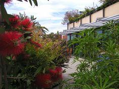 St Johns Wood Roof Terrace | Bowles & Wyer bespoke garden design London