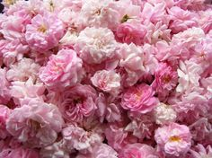 Mounds of Roses