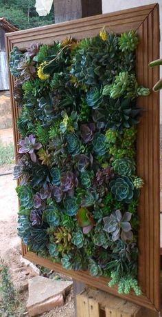 vertical succulent garden in photo frame! #perennialherbgarden