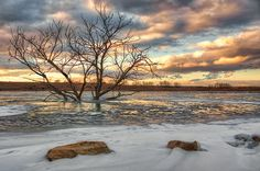 """Sunset at Walnut Creek Lake"" by Nikolyn McDonald is a Midwest landscape.  In this winter scene, snow and ice surround rocks in the foreground and the branches of a dead tree are silhouetted against the blue and gold of the evening sky. reflection,nature,skies,cloud,cloudy,reservoir,golden,environment,outdoor,scenery,horizon,yellow,orange,snowy,water,nature,december,beauty,beautiful,dusk,boulder,shoreline,recreation area,sarpy county,papillion,nebraska,flood control…"