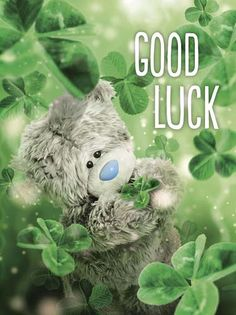 Good Luck Photo Finish Me to You Bear Card : Me to You Bears Online - The Tatty Teddy Superstore. Tatty Teddy, Good Luck Clover, Good Luck Wishes, Good Luck Cards, Teddy Bear Birthday, Teddy Bear Pictures, Bear Graphic, Bear Card, Blue Nose Friends