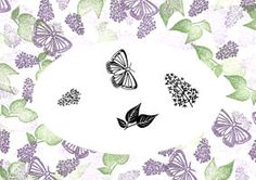 Lovely Lilacs Majestix Stamp Set Includes; Lilac Flower, Small Lilac Flower, Lilac Leaves, Butterfly Stamping Guide as seen on the Packaging For more information See Hints and Tips for Majestix Stamping Stamp Large Lilac out in Heliotrope. Use this stamp to form the basic shape for your design. Fill in with the remaining stamps. Stamp the small Lilac in Grape and fill in with the Leaves in Green Tea. Finally Stamp the Butterfly in Grape. Colours Used: Versacolor; Heliotrope, Grape and…
