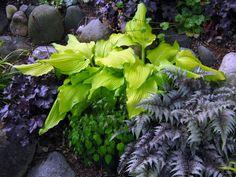 Heuchera 'Dolce Licorice', Hosta 'Kinkaku', Epimedium grandiflorum var. higoense 'Bandit', and Athyrium niponicum 'Burgundy Lace'.