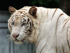 endangered species - Bing Images