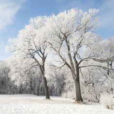 Posterazzi Winnipeg Manitoba Canada Snow On The Ground And Trees Canvas Art - Keith Levit Design Pics x Canada Snow, O Canada, Canada Travel, Landscape Photos, Landscape Photography, Travel Photography, Tree Canvas, Canvas Art, Take Better Photos