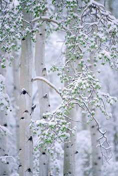Discovered by Sanvila. Find images and videos about nature, winter and snow on We Heart It - the app to get lost in what you love. Winter Szenen, I Love Winter, Winter Magic, Winter Christmas, Winter White, Winter Trees, Snowy Trees, Winter Colors, Hirsch Illustration