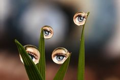 Macro photography of water drop reflections by Brian Valentine
