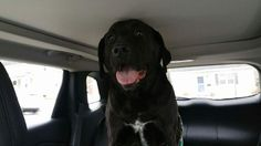 Kendra CoggshallCT Lost/Found Pet Page 4 hrs near Hartford ·   found  in Bristol on East Rd near Hull St. He's currently at Bristol Animal Control Shelter. https://www.facebook.com/CT.Lost.Pets/posts/826060377515839 black lab