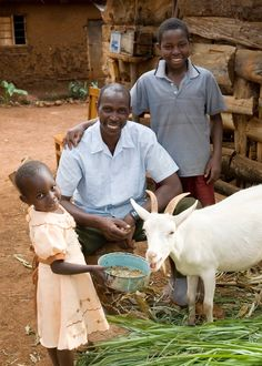 The Heifer Project