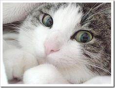 ¿Por qué decimos que los gatos tienen 7 vidas?