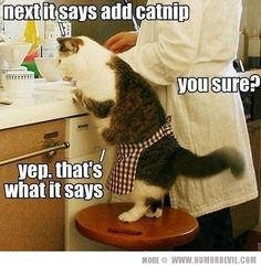 Funny pictures about Now add some catnip. Oh, and cool pics about Now add some catnip. Also, Now add some catnip. I Love Cats, Crazy Cats, Cute Cats, Funny Cats, Funny Animals, Cute Animals, Silly Cats, Animal Captions, Funny Captions
