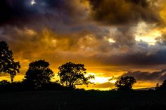 ✳ Silhouette Trees Against Dramatic Sky during Sunset - download photo at Avopix.com for free    ☑ https://avopix.com/photo/65540-silhouette-trees-against-dramatic-sky-during-sunset    #atmosphere #sun #sky #sunset #star #avopix #free #photos #public #domain