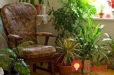 Pop quiz: which is more polluted, indoor air or outdoor air? 10 times out of indoor air in your house, office or apartment is going to be worse than the air outside. Indoor air pollution has been Balcony Plants, Indoor Plants, Potted Plants, Indoor Trees, Leafy Plants, Small Plants, Live Plants, Green Plants, Easy Garden