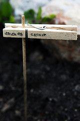 herb garden markers.  quinn.anya on flickr.
