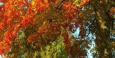 The Autumn Season Reveals So Much