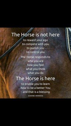Why I love horses...