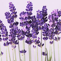 Harness the healing powers of these scents   Health.com