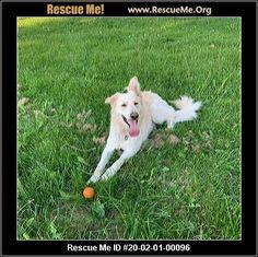 - Wisconsin German Shepherd Rescue - ADOPTIONS - Rescue Me! German Shepherd Adoption, German Shepherd Dogs, Animal Adoption, Pet Adoption, Post Animal, Wisconsin, Cats, Animals, Gatos