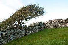 Drystone walls Lahinch/ Liscannor area, Co. Clare / Added by Sunny Wieler