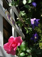 Idei pentru grădină şi terasă: Clematite - Stele florale pe suporturi suspendate Stele, Plant