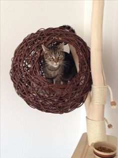Cat Furniture, Catwalks, Nice Things, Grapevine Wreath, Grape Vines, Fur Babies, Baby, Ideas, How To Make Crafts