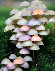 pastel mushrooms