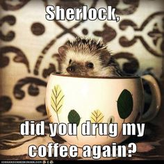 """Sherlock, did you drug my coffee again?"" -- I hear Martin saying this in his Hitchhiker's Guide after-exiting-the-Improbability-drive-as-a-sofa voice."