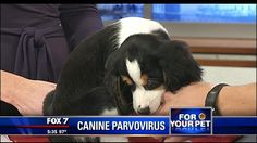 Preventable diseases in dogs - http://austin.citylocalbuzz.com/preventable-diseases-in-dogs/