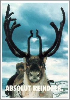 Reindeer - Waterkant-Card from South-Africa