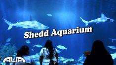 Shedd Acuario - Chicago #2