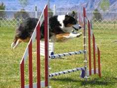 #Agility Training helps dog and owner work together with better understanding
