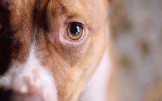 This Beautiful Video is a Great Reminder to Always Adopt, No Matter What the Breed Is