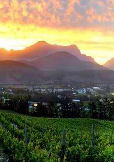 A lover's insight into classic wines - South Africa Nature Pictures, Travel Pictures, Amazing Places, Beautiful Places, Wine Mixed Drinks, Cape Town South Africa, Wine Parties, Nature Adventure, Wine Time