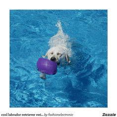 cool labrador retriever swimming poster