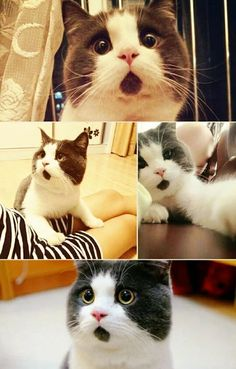 Photo: ___HOW CUTE THE CAT LOOK'S LIKE _HE'S MOUTH IS ALWAYS OPEN