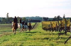 Randonnée à cheval dans notre vignoble charentais | Pays de Haute Saintonge Charente-Maritime Tourisme #charentemaritime | #randonnée | #cheval | #loisir | #famille | © CDCHS - V. SABADEL